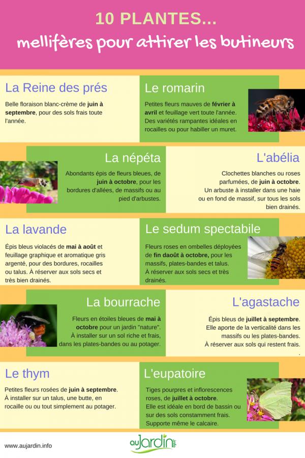 10 plantes mellifères pour attirer les butineurs