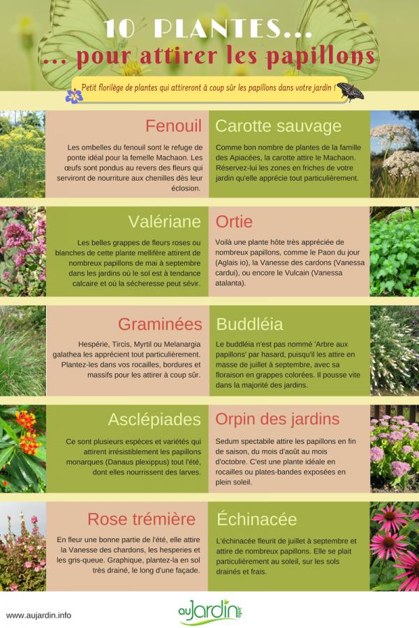 10 plantes pour attirer les papillons