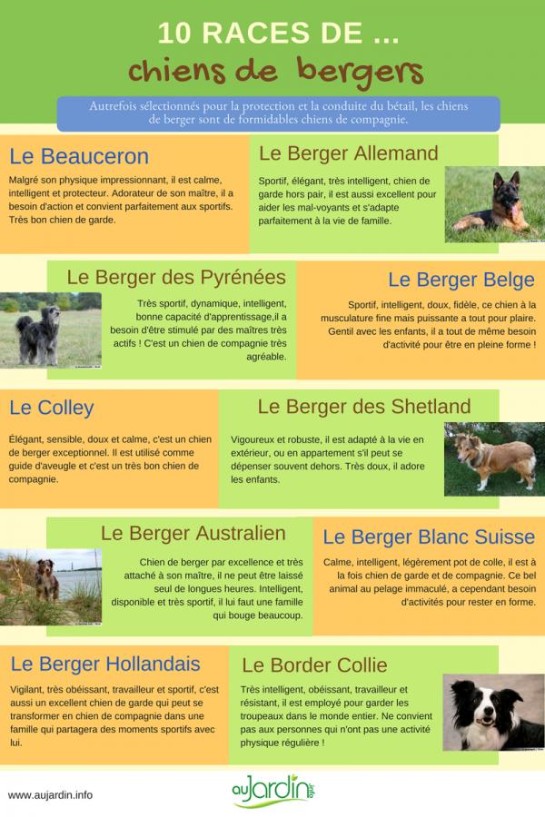 10 races de chiens de berger