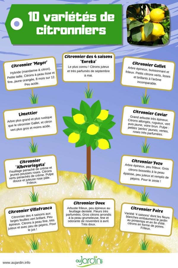 10 variétés de citronniers