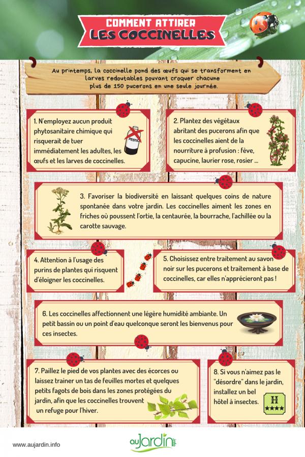 Comment attirer les coccinelles au jardin?
