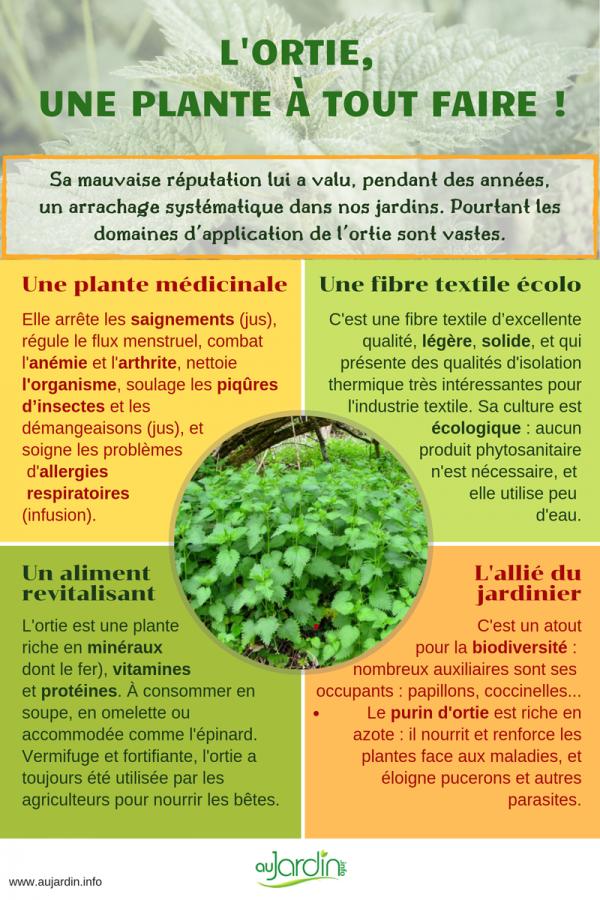 L'ortie, une plante à tout faire