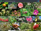 La recherche visuelle de plantes pour vous faciliter la vie!