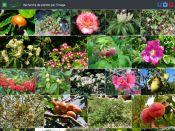 Mosaïque de plantes, recherche par l'image