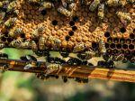 Questions fréquentes sur l'apiculture