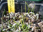 Comment semer des plantes vivaces très simplement ?