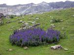 Les plantes les plus toxiques en France