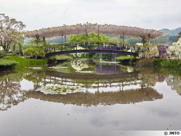 Pont des glycines, Ashikaga Flower Park
