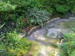 Des fougères dans mon jardin