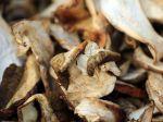 La conservation des champignons