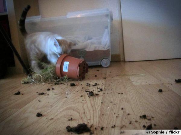 Un chat pris en flagrant délit de bêtises....