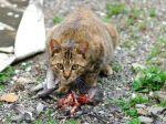 Comment limiter la prédation du chat?