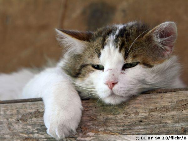 Mode repos pour ce chat mais quid de son haleine ?