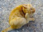 Traiter et prévenir les puces et les tiques sur le chat
