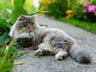 Quelle est l'espérance de vie d'un chat?