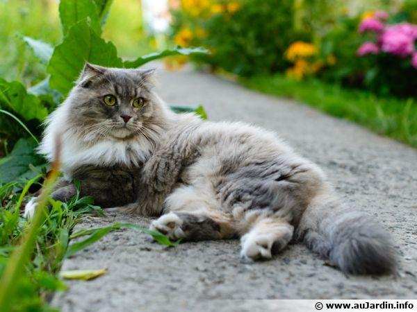 La belle au jardin du chat...