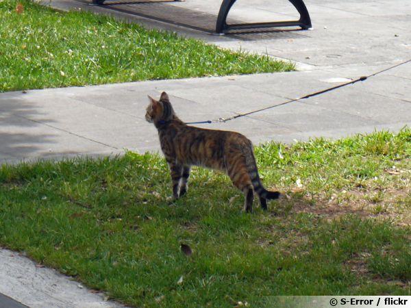 Un chat dans un parc en laisse