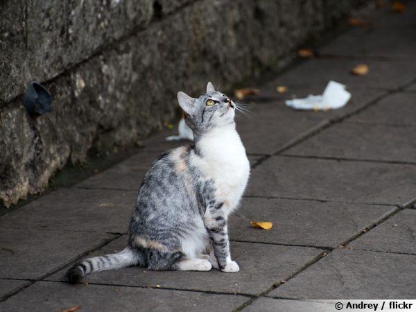 Le chat châsse les oiseaux par nature