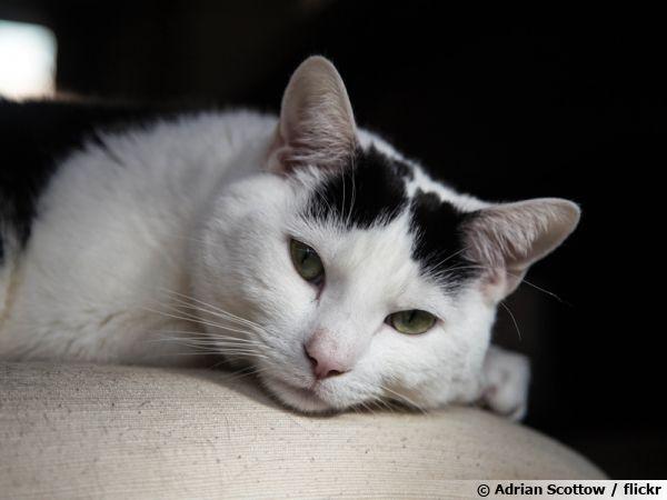 Un chat paisible...