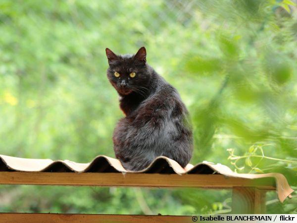 Un chat en hateur pour mieux observer son territoire