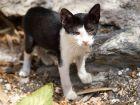 Traiter et prévenir les vers du chat