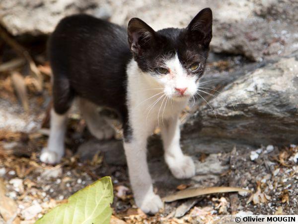 Les chatons sont plus vulnérables aux vers du chat, traitez-les rapidement surtout s'ils sortent à l'extérieur