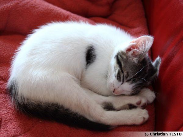 Un chaton en plein repos