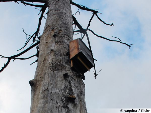 Un abri pour chauve-souris loin des prédateurs