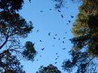 Des chauves-souris contre les moustiques