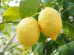 Questions fréquentes sur le citronnier