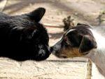 La cohabitation entre chiens et chats