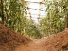 Comment cultiver les légumes sous serre?