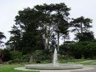Cyprès de Lambert, Cyprès de Monterey, Cyprès à gros fruits, Cupressus macrocarpa