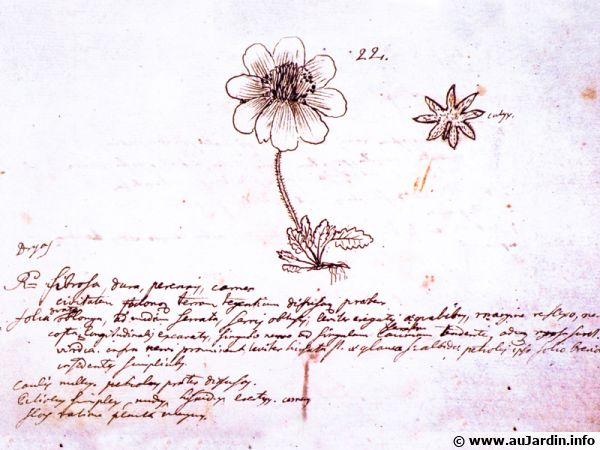Extrait du journal de voyage de Linné en Laponie, description d'un Dryas.