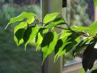 Dans la maison, ces plantes qui veillent sur notre santé