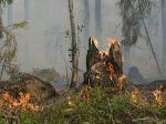 Champignons et incendies