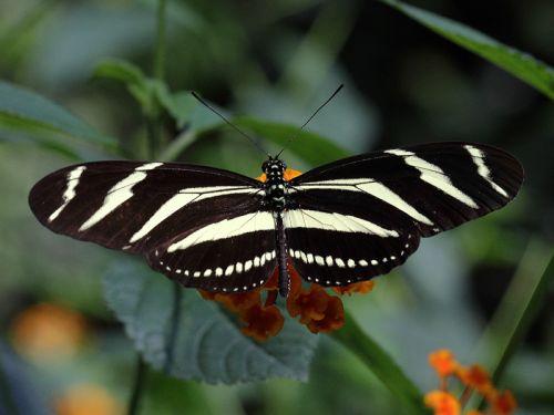 Photographier dans une serre à papillons