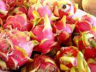 Fruit du dragon rouge, Pitaya rouge, Hylocereus undatus