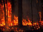 Les incendies, un bienfait pour les plantes pyrophytes