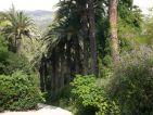 Val Rahmeh, allée d'entrée du jardin et sa haie de palmiers