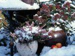 Des jardinières pour Noël