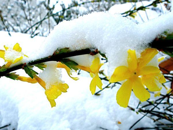 Fleur D Hiver Pour Cimetiere : 10 fleurs pour l 39 hiver ~ Nature-et-papiers.com Idées de Décoration