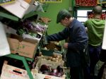 Quand et comment semer les légumes primeurs?