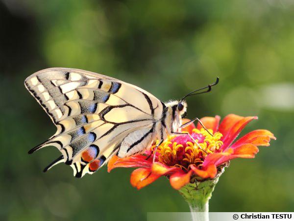 Avant qu'un papillon se pose sur une fleur, il faut souvent patienter