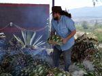 Tequila et mescal, des produits de l'agave