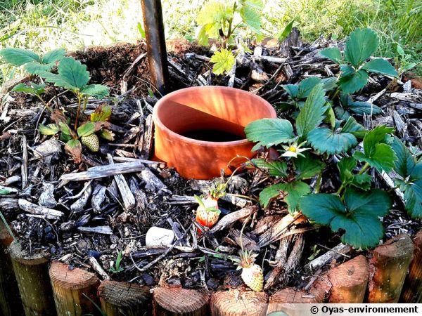 Une olla par Oya Environnement au pied d'un fraisier