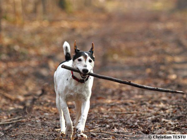 Le mode Al Servo chez Canon permet de faire la mise au point sur un sujet en mouvement. L'animal reste net malgré sa course.
