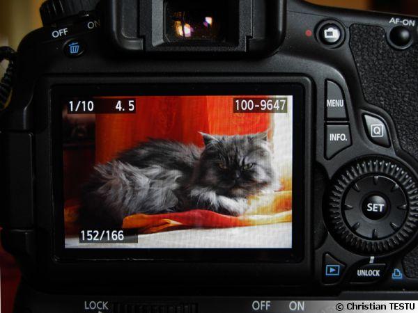 Photographier les animaux de compagnie
