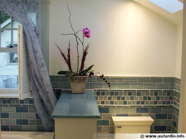 Une orchidée Phalaenopsis appréciera la salle de bain