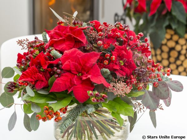 Le poinsettia en bouquet au salon